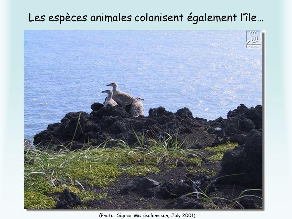 Les espèces animales colonisent également lîle… (Photo: Sigmar Metúsalemsson, July 2001)