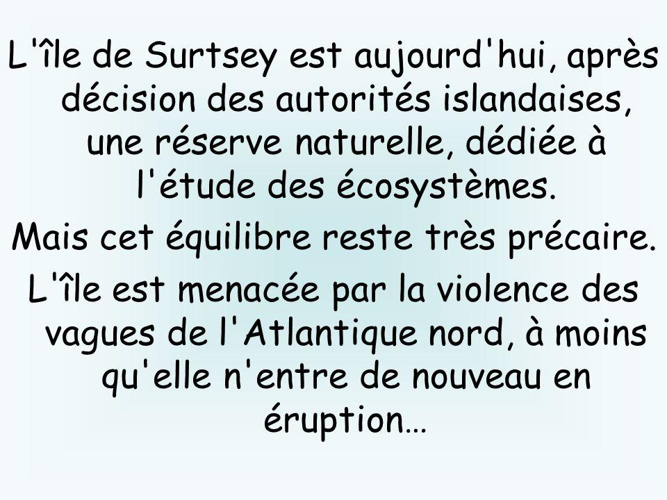 L'île de Surtsey est aujourd'hui, après décision des autorités islandaises, une réserve naturelle, dédiée à l'étude des écosystèmes. Mais cet équilibr