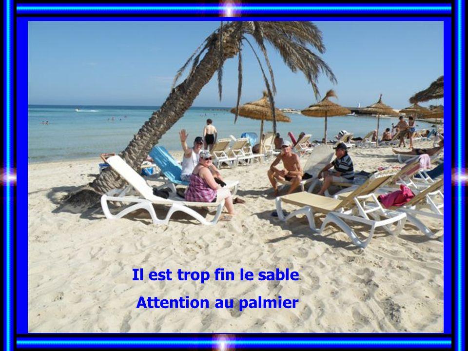Il est trop fin le sable Attention au palmier