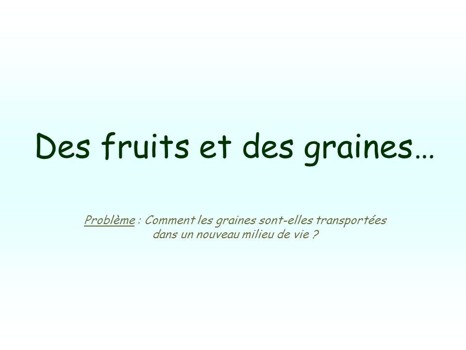 Des fruits et des graines… Problème : Comment les graines sont-elles transportées dans un nouveau milieu de vie ?