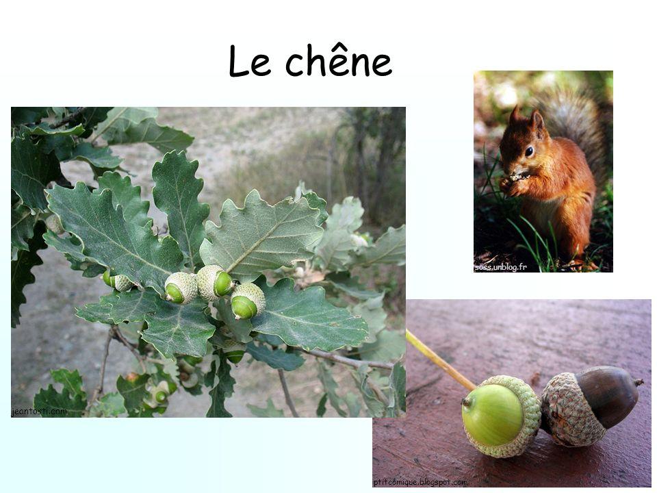 Le chêne ptitcomique.blogspot.com soss.unblog.fr jeantosti.com