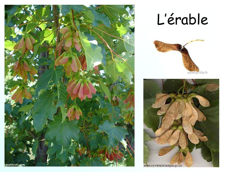 Lérable jeantosti.com www.cs-renelevesque.qc.ca www4.ac-lille.fr