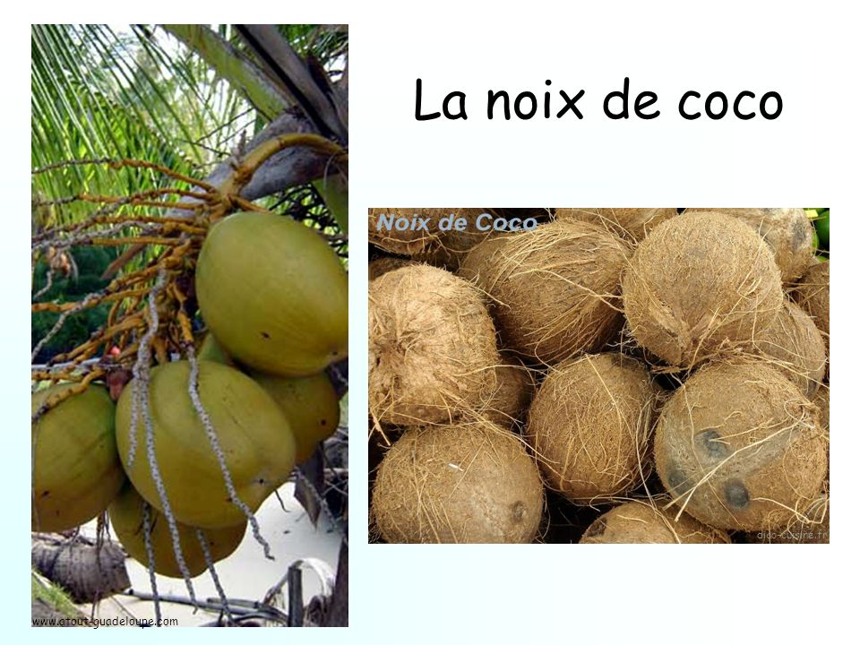 La noix de coco dico-cuisine.fr www.atout-guadeloupe.com