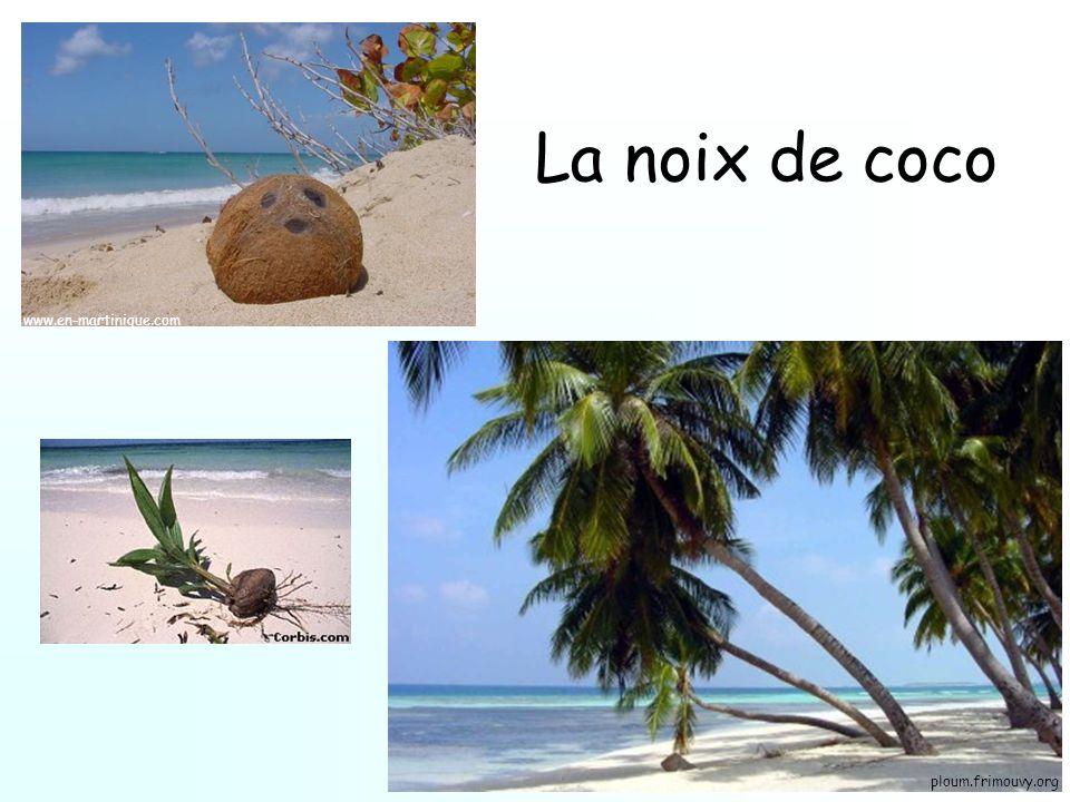 La noix de coco ploum.frimouvy.org www.en-martinique.com