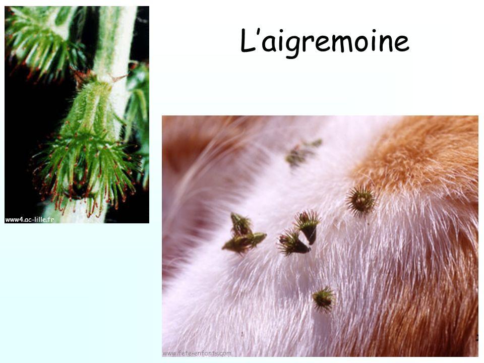 Laigremoine www4.ac-lille.fr www.fete-enfants.com