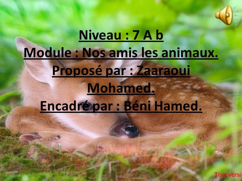 Niveau : 7 A b Module : Nos amis les animaux.Proposé par : Zaaraoui Mohamed.