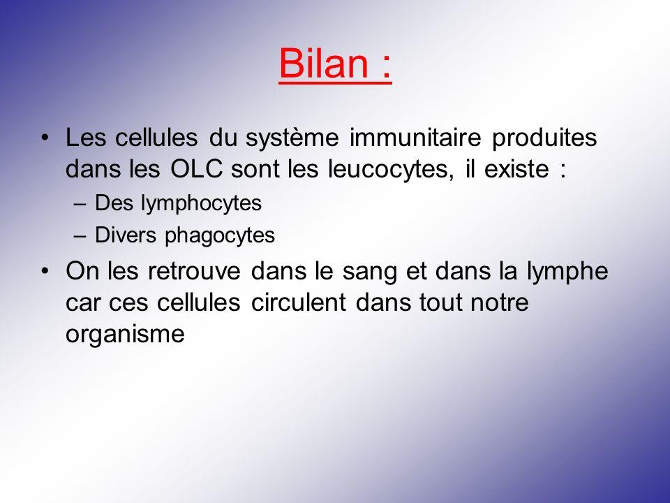 Bilan : Les cellules du système immunitaire produites dans les OLC sont les leucocytes, il existe : –Des lymphocytes –Divers phagocytes On les retrouv