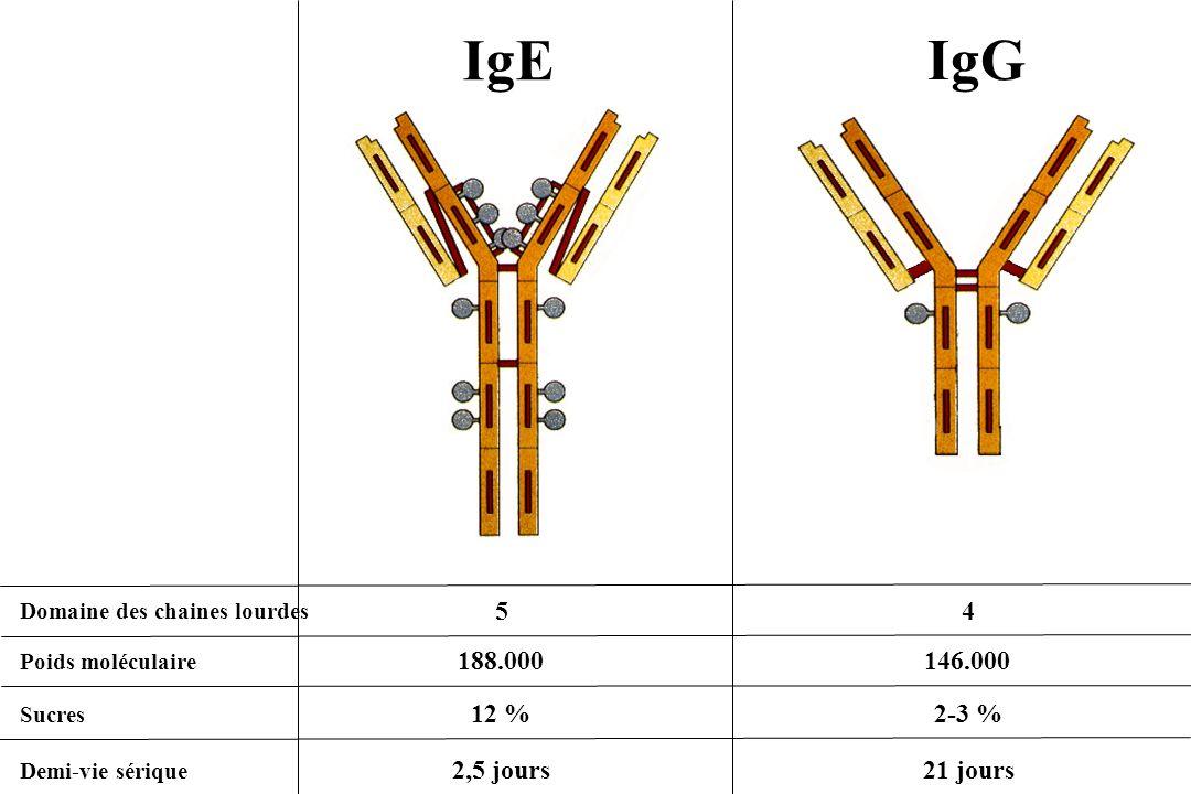 IgE IgG Domaine des chaines lourdes Poids moléculaire Sucres Demi-vie sérique 5 4 188.000 146.000 12 %2-3 % 2,5 jours21 jours