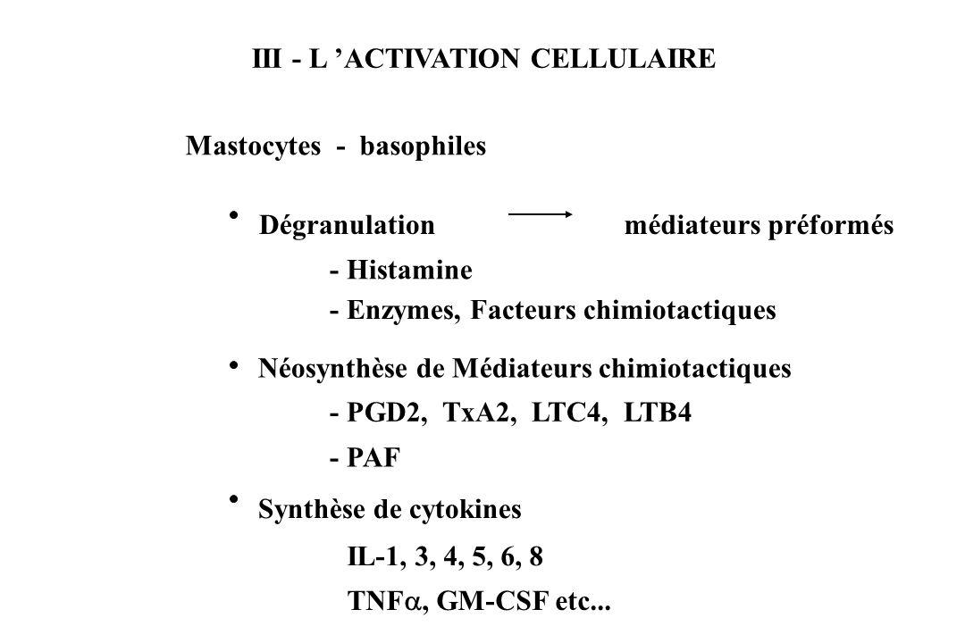 III - L ACTIVATION CELLULAIRE Mastocytes - basophiles - Histamine - Enzymes, Facteurs chimiotactiques Dégranulationmédiateurs préformés Néosynthèse de