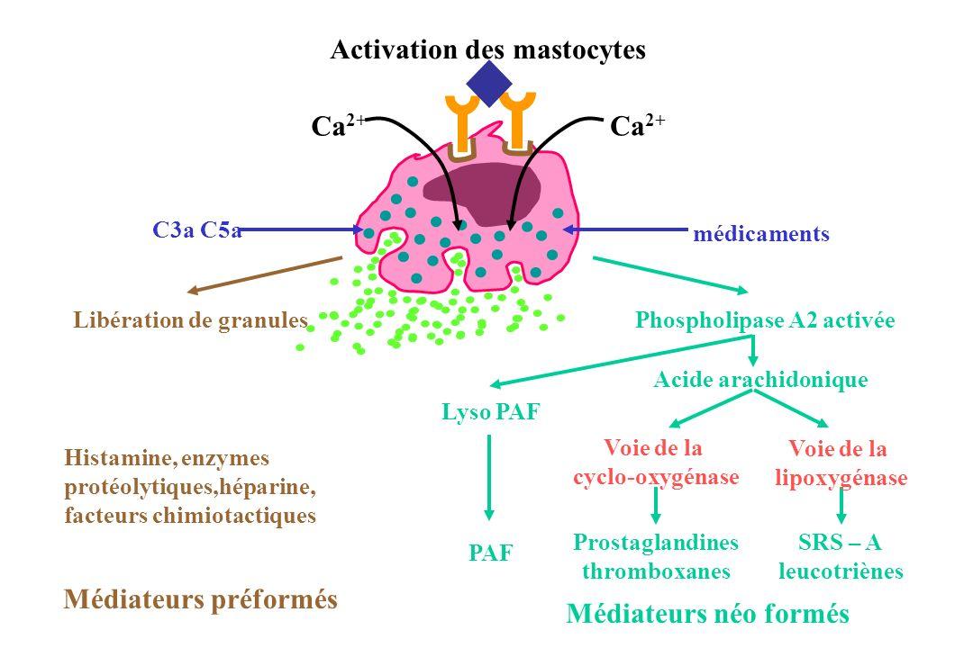 Médiateurs préformés Médiateurs néo formés Activation des mastocytes Acide arachidonique Prostaglandines thromboxanes SRS – A leucotriènes Voie de la