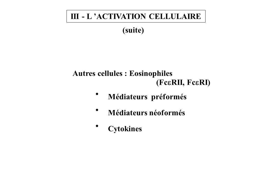III - L ACTIVATION CELLULAIRE (suite) Autres cellules : Eosinophiles (Fc RII, Fc RI) Médiateurs préformés Médiateurs néoformés Cytokines