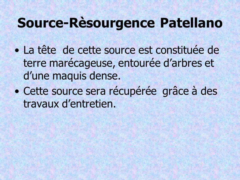 Source-Rèsourgence Patellano La tête de cette source est constituée de terre marécageuse, entourée darbres et dune maquis dense.