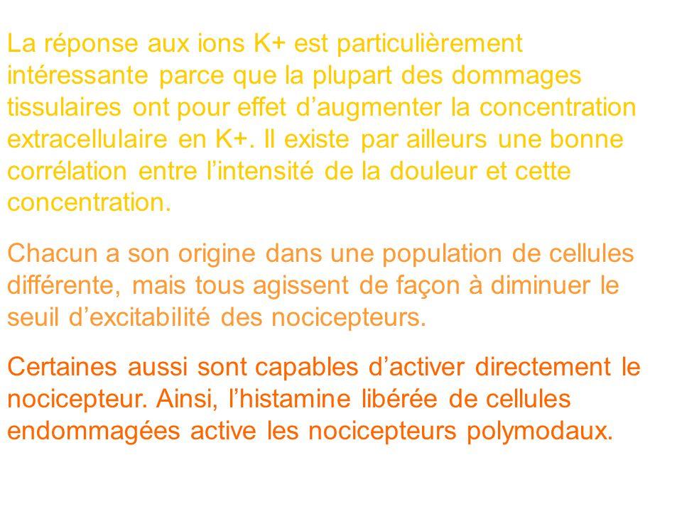 La réponse aux ions K+ est particulièrement intéressante parce que la plupart des dommages tissulaires ont pour effet daugmenter la concentration extr