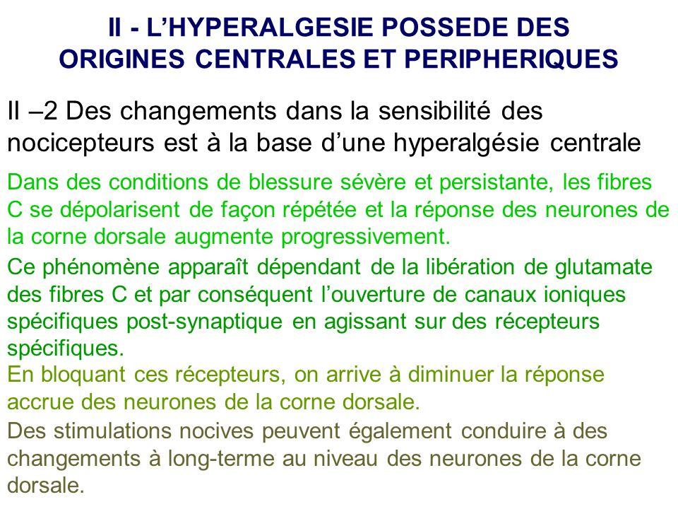 II –2 Des changements dans la sensibilité des nocicepteurs est à la base dune hyperalgésie centrale II - LHYPERALGESIE POSSEDE DES ORIGINES CENTRALES