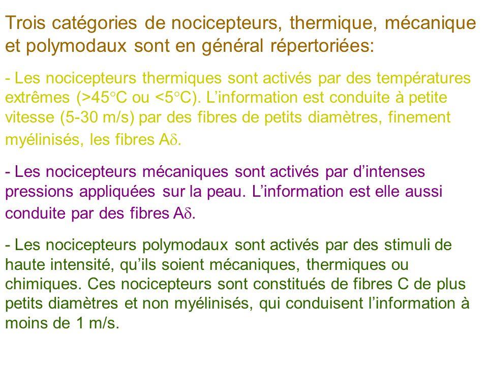 Trois catégories de nocicepteurs, thermique, mécanique et polymodaux sont en général répertoriées: - Les nocicepteurs thermiques sont activés par des