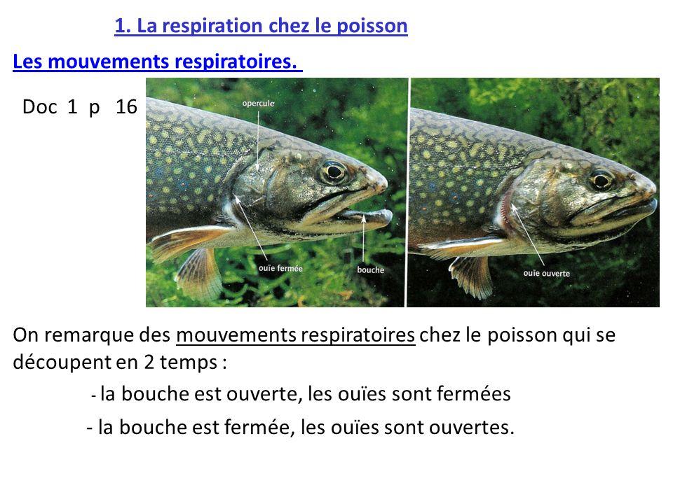 1. La respiration chez le poisson Doc 1 p 16 : Les mouvements respiratoires. - la bouche est ouverte, les ouïes sont fermées - la bouche est fermée, l