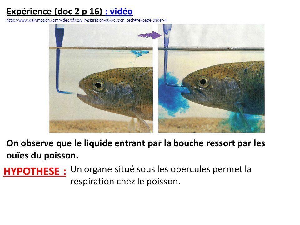 Expérience (doc 2 p 16) : vidéo: vidéo http://www.dailymotion.com/video/xf7z9y_respiration-du-poisson_tech#rel-page-under-4 On observe que le liquide