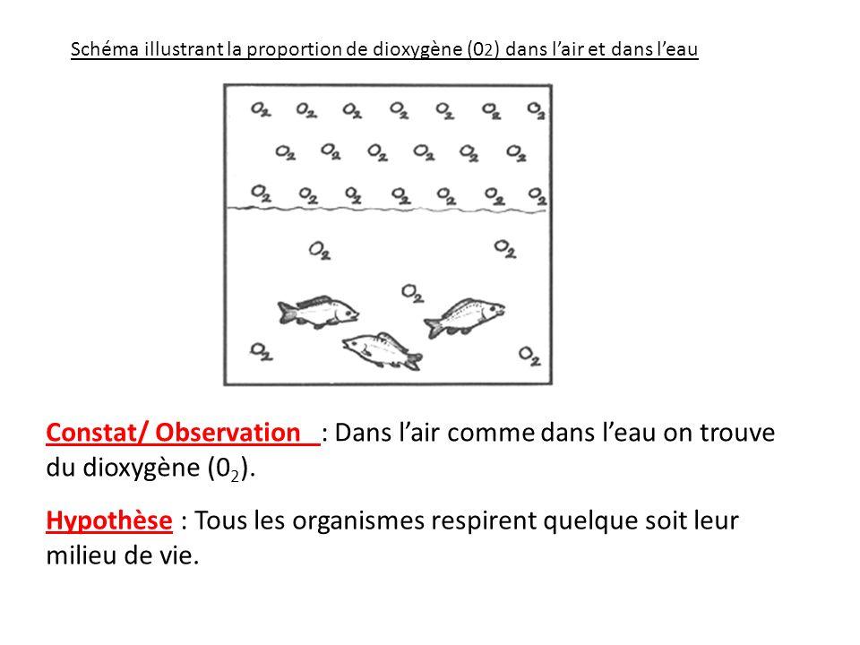 Constat/ Observation : Dans lair comme dans leau on trouve du dioxygène (0 2 ). Hypothèse : Tous les organismes respirent quelque soit leur milieu de