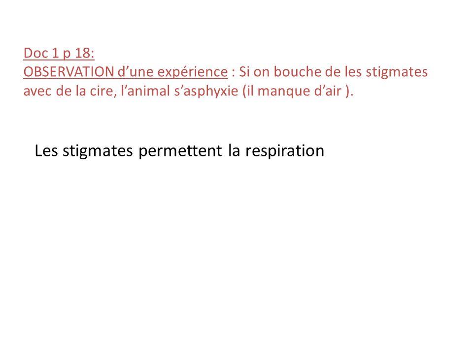 Doc 1 p 18: OBSERVATION dune expérience : Si on bouche de les stigmates avec de la cire, lanimal sasphyxie (il manque dair ). Les stigmates permettent