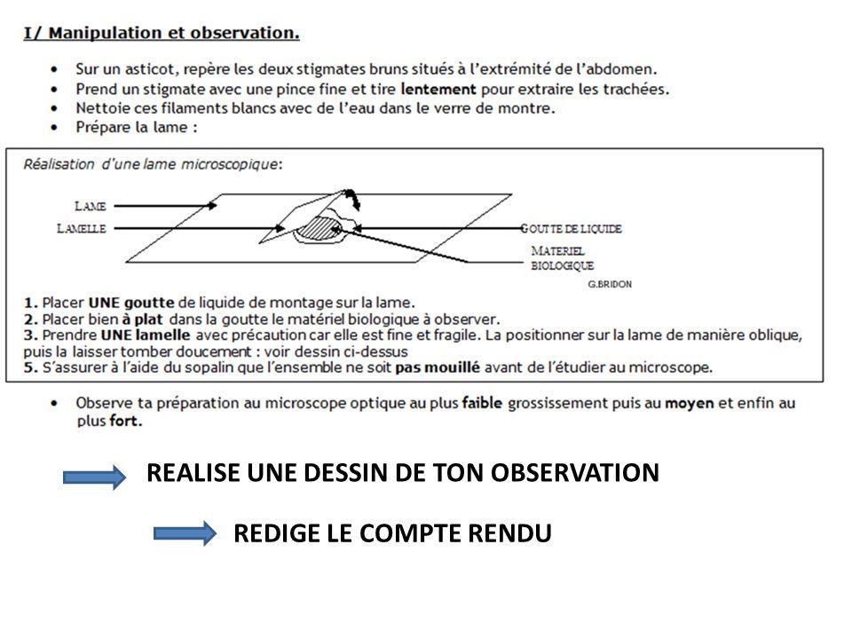 REALISE UNE DESSIN DE TON OBSERVATION REDIGE LE COMPTE RENDU