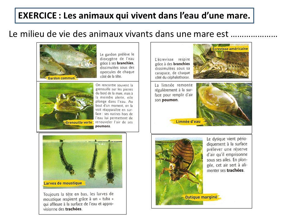 EXERCICE : Les animaux qui vivent dans leau dune mare. Le milieu de vie des animaux vivants dans une mare est …………………