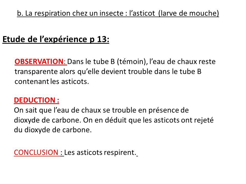 b. La respiration chez un insecte : lasticot (larve de mouche) Etude de lexpérience p 13: OBSERVATION: Dans le tube B (témoin), leau de chaux reste tr