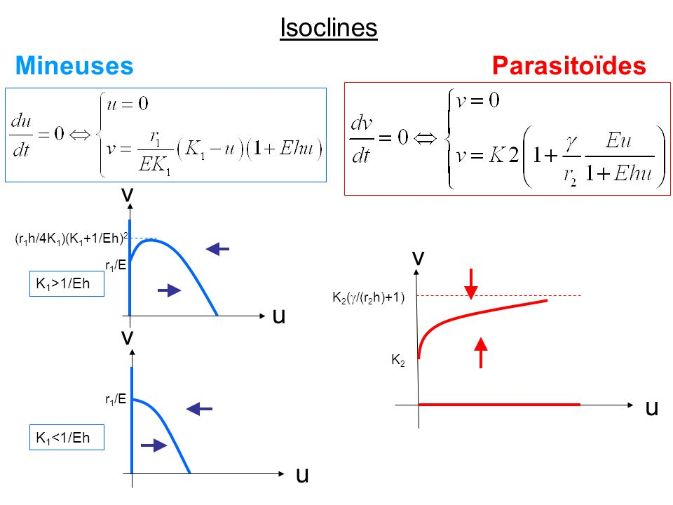 B. Sans espace Système de deux équations différentielles ordinaires - Isoclines - Equilibres - Simulations numériques