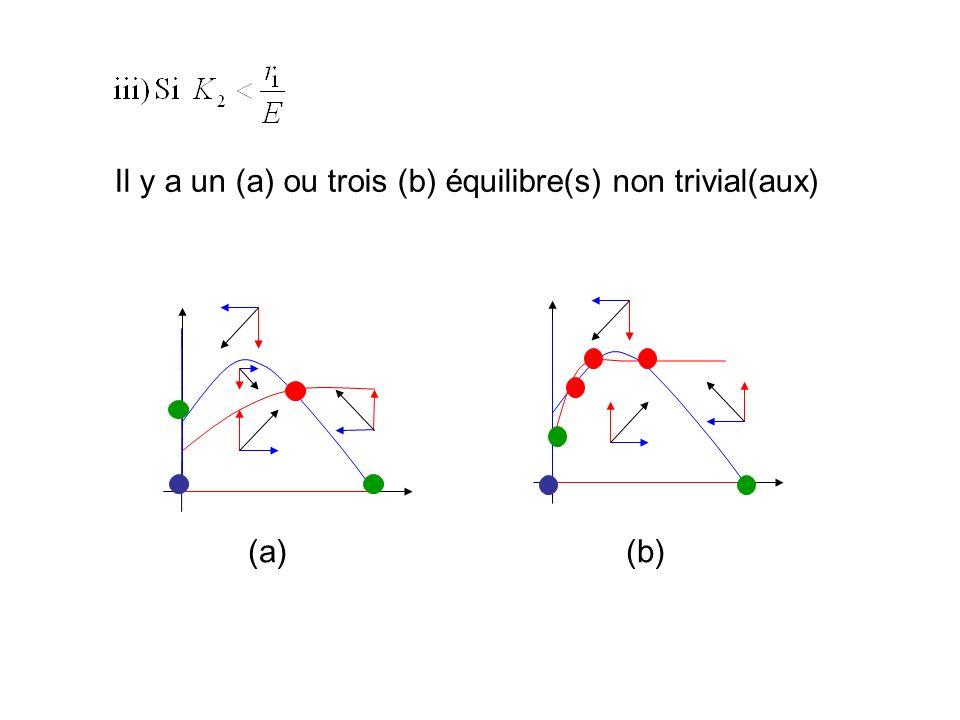 Il y a deux équilibres non triviaux, dont un est un point selle. Les équilibres (0,K 2 ) et (u 2,v 2 ) sont tous les deux localement stables et lissue