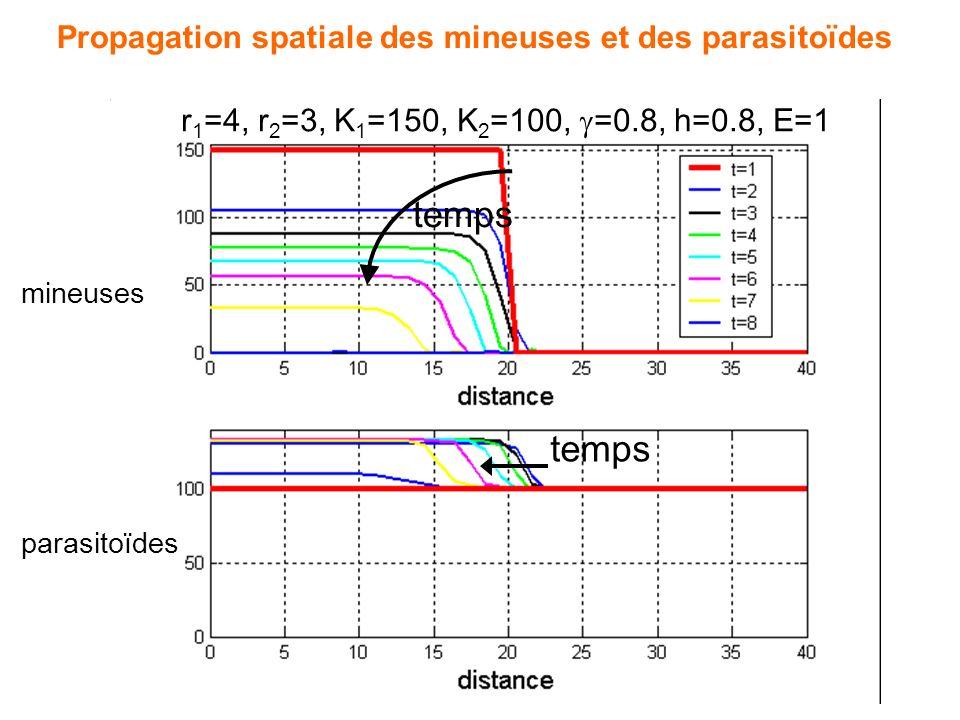 Simulations numériques avec logiciel MATLAB Condition initiale : - parasitoïdes présents partout - mineuses seulement à gauche du domaine C. Avec espa