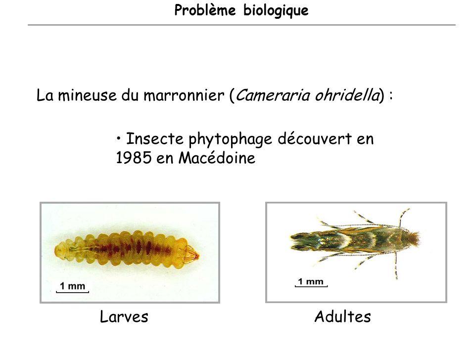 Problème biologique La mineuse du marronnier (Cameraria ohridella) : Insecte phytophage découvert en 1985 en Macédoine AdultesLarves