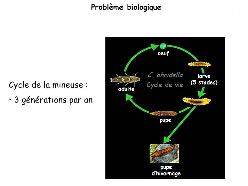 Problème biologique Cycle de la mineuse : 3 générations par an oeuf larve (5 stades) pupe adulte pupe dhivernage C.