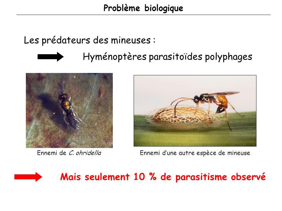 Problème biologique Les prédateurs des mineuses : Mais seulement 10 % de parasitisme observé Hyménoptères parasitoïdes polyphages Ennemi de C.