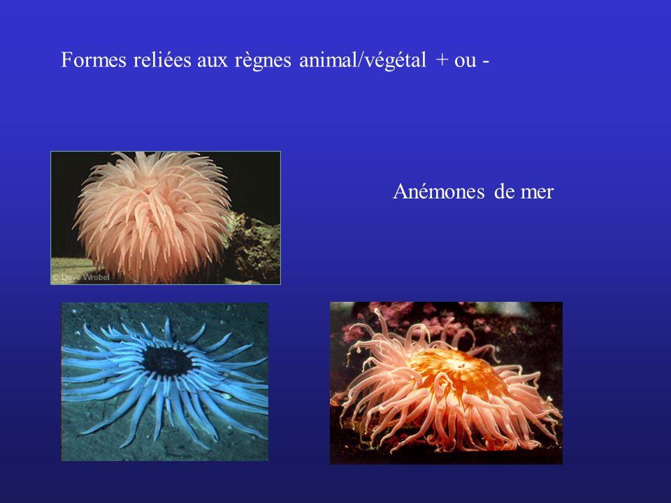 Anémones de mer Formes reliées aux règnes animal/végétal + ou -