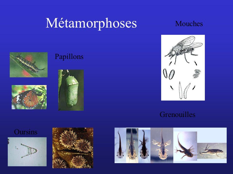 Métamorphoses Papillons Mouches Oursins Grenouilles
