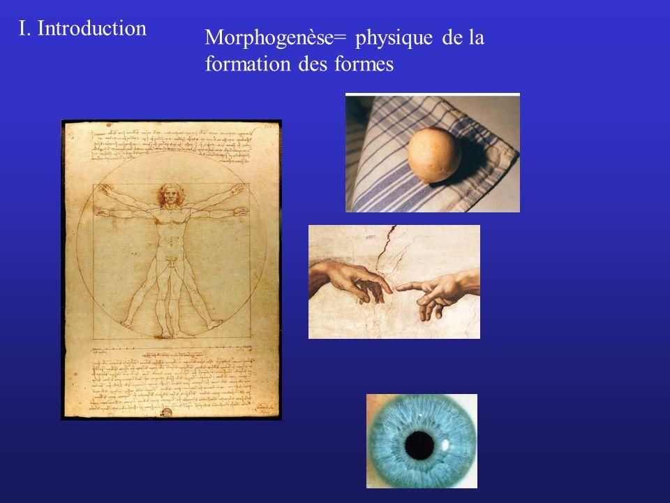 Morphogenèse= physique de la formation des formes I. Introduction