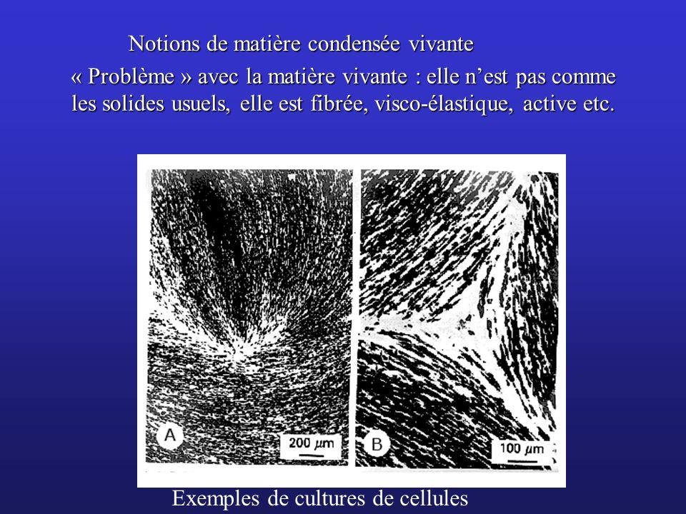 « Problème » avec la matière vivante : elle nest pas comme les solides usuels, elle est fibrée, visco-élastique, active etc. Exemples de cultures de c