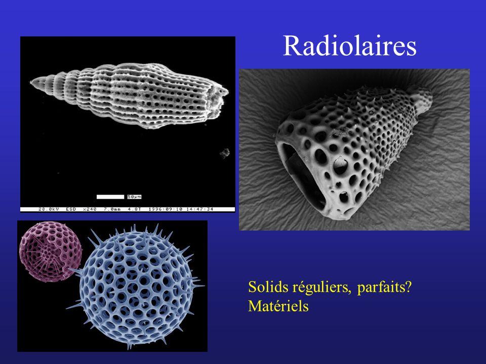 Radiolaires Solids réguliers, parfaits? Matériels