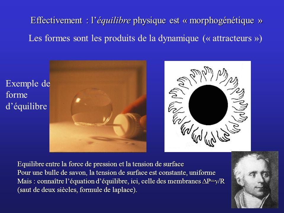 Effectivement : léquilibre physique est « morphogénétique » Equilibre entre la force de pression et la tension de surface Pour une bulle de savon, la