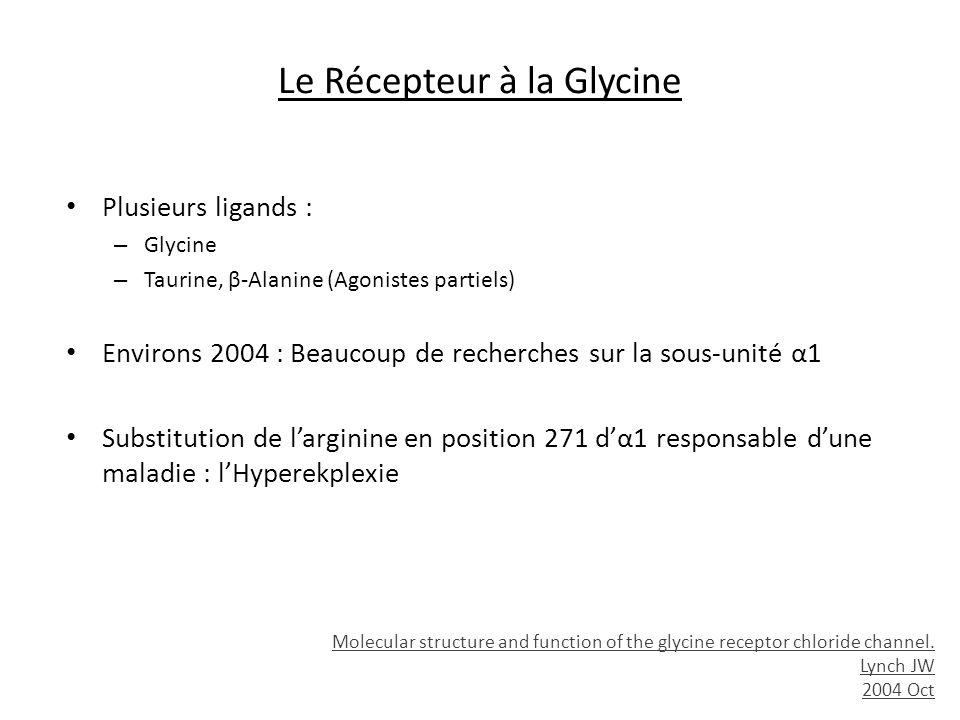 Le Récepteur à la Glycine Plusieurs ligands : – Glycine – Taurine, β-Alanine (Agonistes partiels) Environs 2004 : Beaucoup de recherches sur la sous-u