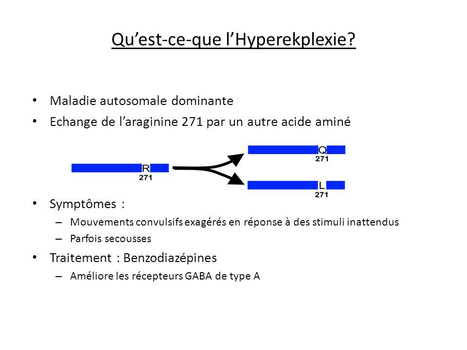 Quest-ce-que lHyperekplexie? Maladie autosomale dominante Echange de laraginine 271 par un autre acide aminé Symptômes : – Mouvements convulsifs exagé