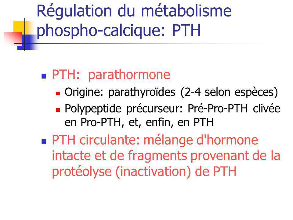 Régulation du métabolisme phospho-calcique: PTH PTH: parathormone Origine: parathyroïdes (2-4 selon espèces) Polypeptide précurseur: Pré-Pro-PTH clivé
