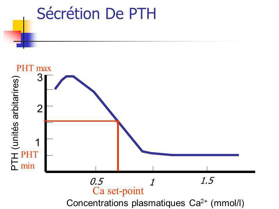 Sécrétion De PTH Concentrations plasmatiques Ca 2+ (mmol/l) 1 2 3 PTH (unités arbitarires) Ca set-point PHT max PHT min 0.5 1 1.5