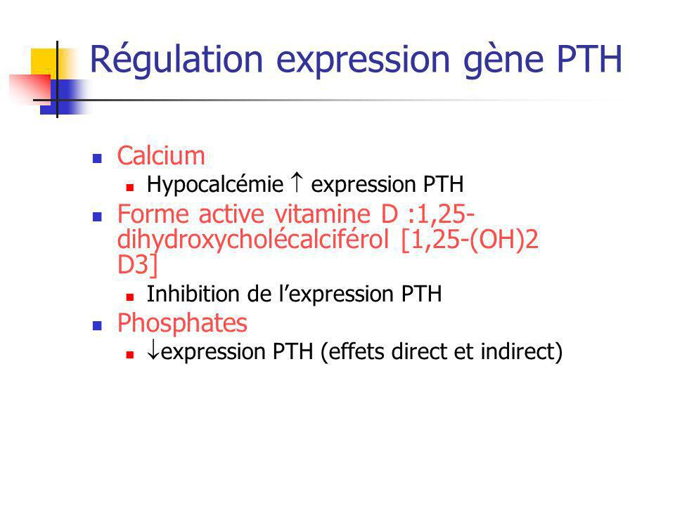 Régulation expression gène PTH Calcium Hypocalcémie expression PTH Forme active vitamine D :1,25- dihydroxycholécalciférol [1,25-(OH)2 D3] Inhibition de lexpression PTH Phosphates expression PTH (effets direct et indirect)