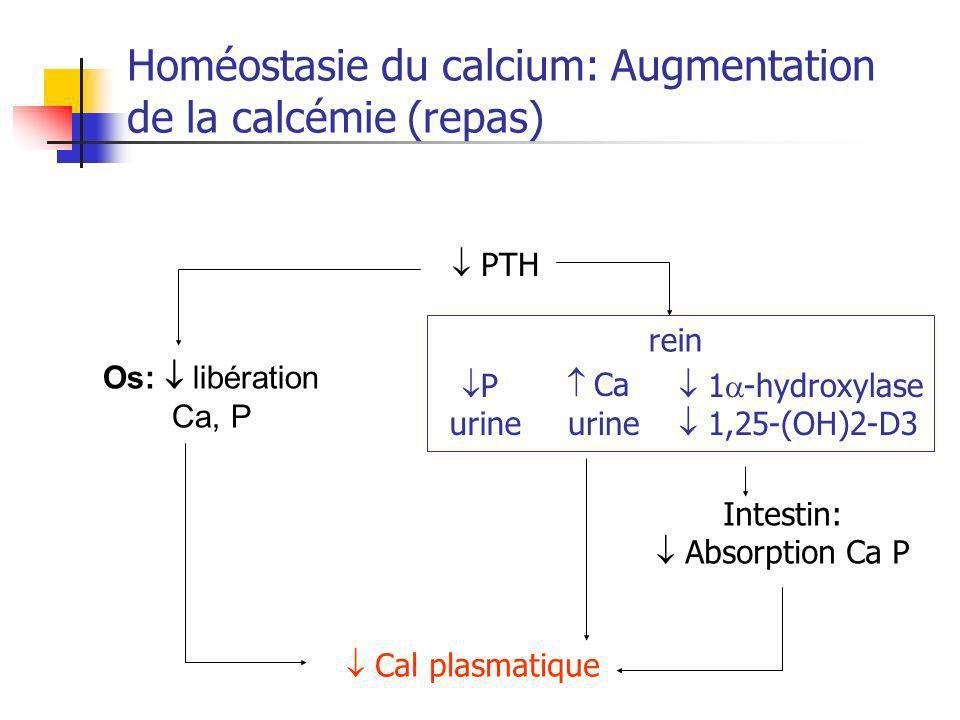 Homéostasie du calcium: Augmentation de la calcémie (repas) PTH Os: libération Ca, P Cal plasmatique 1 -hydroxylase 1,25-(OH)2-D3 P urine Ca urine rei