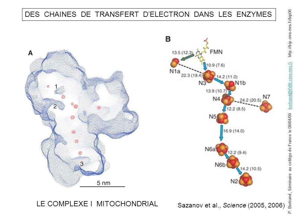 DES CHAINES DE TRANSFERT DELECTRON DANS LES ENZYMES Sazanov et al., Science (2005, 2006) LE COMPLEXE I MITOCHONDRIAL P. Bertrand, Séminaire au collège