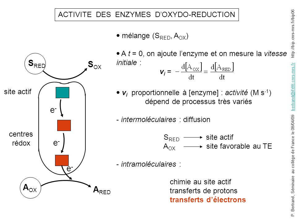 ACTIVITE DES ENZYMES DOXYDO-REDUCTION mélange (S RED, A OX ) A t = 0, on ajoute lenzyme et on mesure la vitesse initiale : v i = v i proportionnelle à