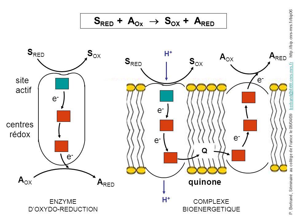 S RED S OX A OX A RED e-e- S RED S OX A OX A RED e-e- e-e- e-e- e-e- site actif centres rédox ENZYME DOXYDO-REDUCTION COMPLEXE BIOENERGETIQUE Q quinon