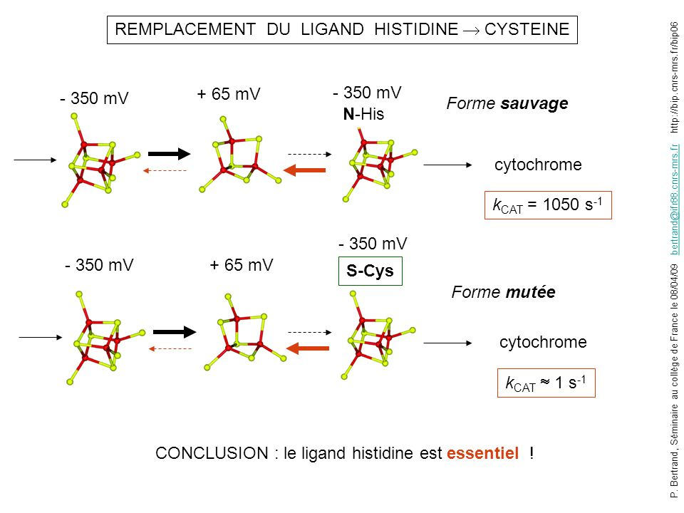 - 350 mV REMPLACEMENT DU LIGAND HISTIDINE CYSTEINE cytochrome k CAT = 1050 s -1 N-His - 350 mV cytochrome k CAT 1 s -1 S-Cys + 65 mV CONCLUSION : le ligand histidine est essentiel .
