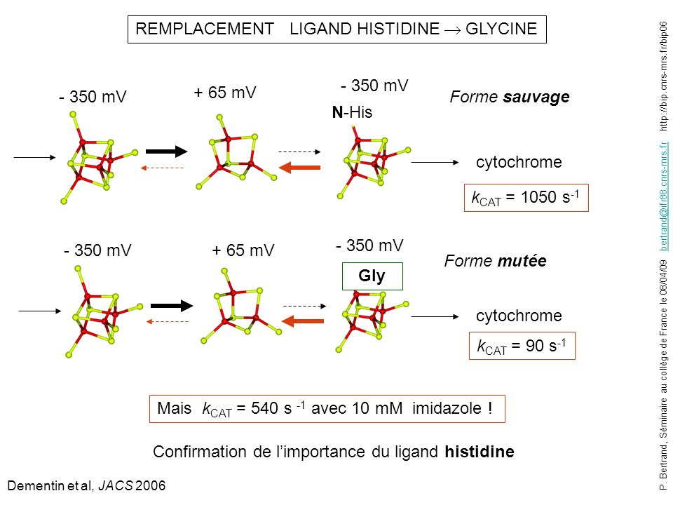 - 350 mV REMPLACEMENT LIGAND HISTIDINE GLYCINE cytochrome k CAT = 1050 s -1 N-His - 350 mV Gly + 65 mV cytochrome k CAT = 90 s -1 Mais k CAT = 540 s -1 avec 10 mM imidazole .