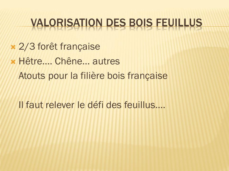 2/3 forêt française Hêtre….
